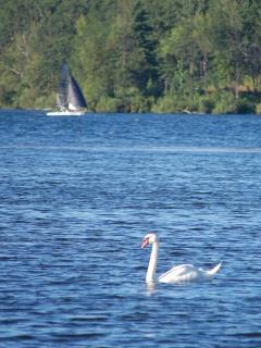 Black Sail (Jim approved \m/), White Swan