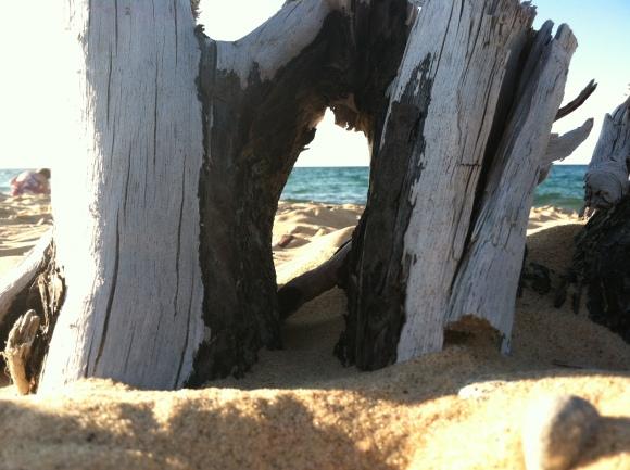 Superior Through Driftwood