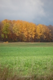 Fall Color on the Way to Empire