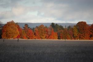 Fall Color on Horizon