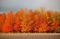 Fall Color, October Sky