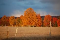 Orange Tree, Purple Sky