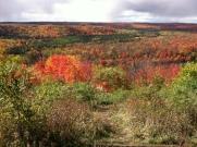 Fall Color @ Dead Mans Hill