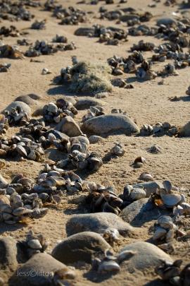 Shell-Strewn Sands