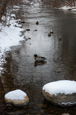 Boardman River, Winter