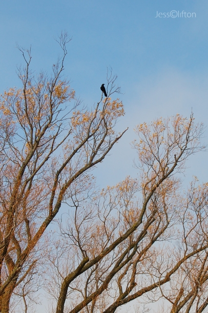 Bird Perched in Tree