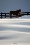 Horse Snow Pasture