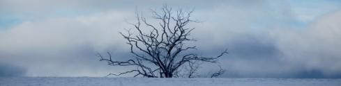 cropped-single_snowy_tree.jpg