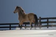 Horse Trot Snow