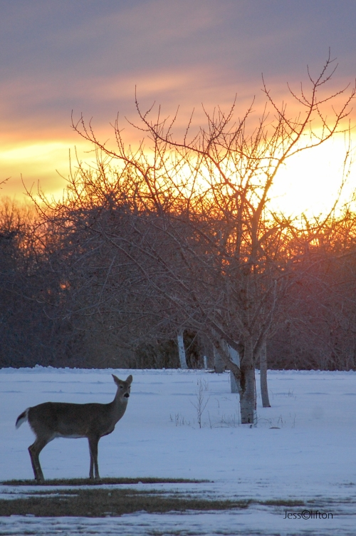 deer_sunset_omp