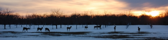 group_deer_snow