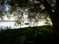 west_bay_beyond_tree