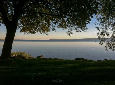 west_bay_tree_canopy_power_island