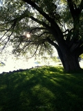 west_end_beach_light_through_tree