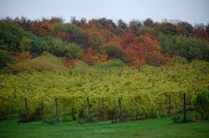 45_North_Vineyards_Fall