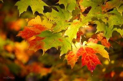 Bright_Color_Fall_Leaves_Sun