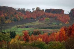 Fall_Hillside_Suttons_Bay