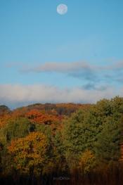 Fall_Moon