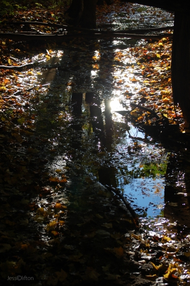 Forest_Shadow_River