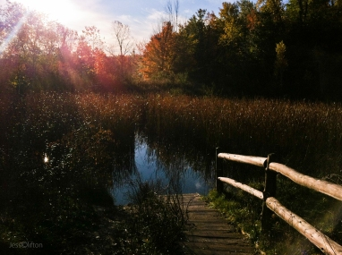 Hickory_Meadows_Pond