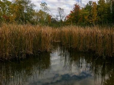 HickoryMeadowsSwamp