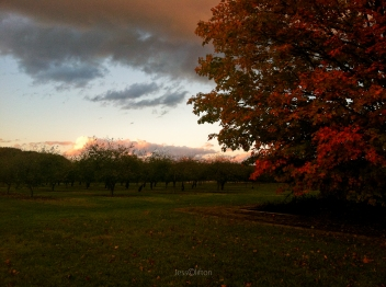 old_mission_peninsula_fall_sunset_tree