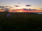 old_mission_peninsula_sunset_wild_flower