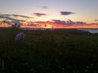 old_mission_peninsula_sunset_wild_flower