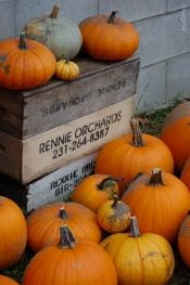 PumpkinsRennieOrchards