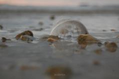ShorelineFeather