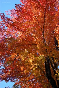 Bright_Red_Tree