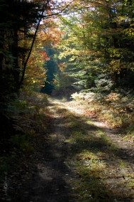 Fall_Forest_Sunlit_Path