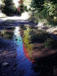 Fall_Road_Puddle_Reflection