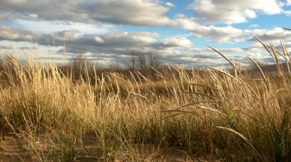 Tall Dune Grass - Sky Clouds Light