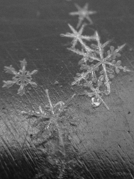 Snowflakes Black and White