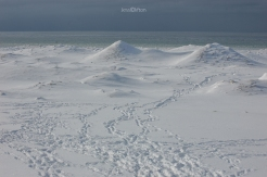Empire Ice Mounds