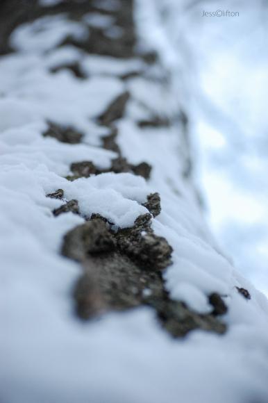 Snow Blasted Tree Bark