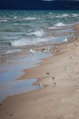 Glen Haven Shoreline Birds