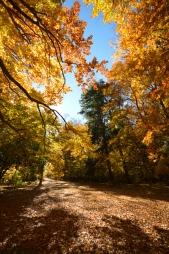 Ashton Path